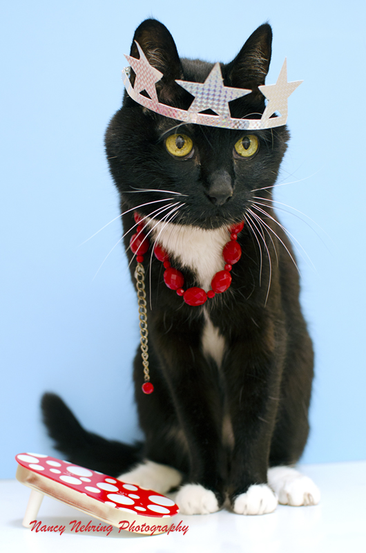 Party cat wiht star crown, red bead necklace and noise maker on blue background.