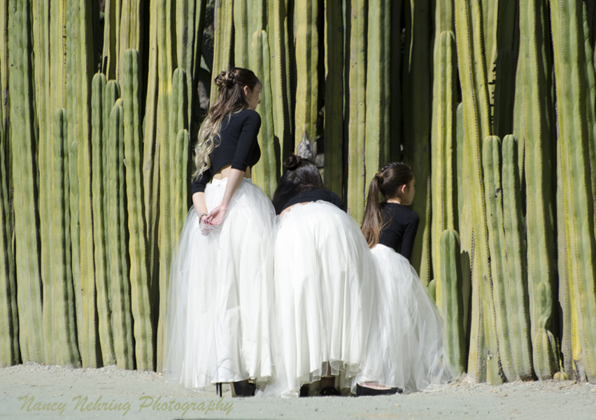 Bridesmaids peeking through opening in organ cactus wall. Jardín Etnobotánico de Oaxaca, Oaxaca City, Oaxaca, Mexico.